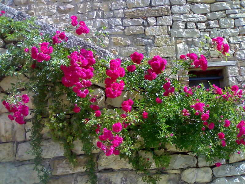 Le realizzazioni chianti garden