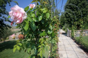 composizione rose07